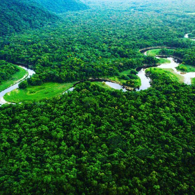 DIA DA AMAZÔNIA  Hoje, 5/9 é comemorado no Brasil o dia da Amazônia.A riqueza da Amazônia vai além da sua fauna e flora. Está também na diversidade cultural traduzida em nossos produtos. Toda essa riqueza merece ser valorizada e compartilhada. Ao comprar os itens produzidos na região, você estimula a economia da floresta e ajuda a conservá-la. Por aqui você encontra a @jambuzera que coopera com a conservação da Amazônia brasileira. #DaAmazôniaParaVocê #PresentesDaAmazônia #AmazôniaEmCasa #FlorestaEmPé #CompreDaAmazônia #PelosPovosDaFloresta